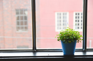 Plant on a windowsill